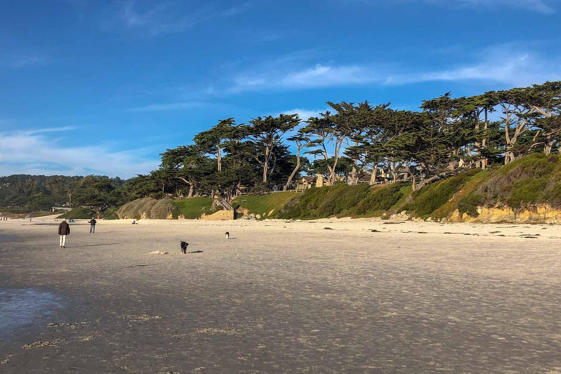 carmel_beach_dogs