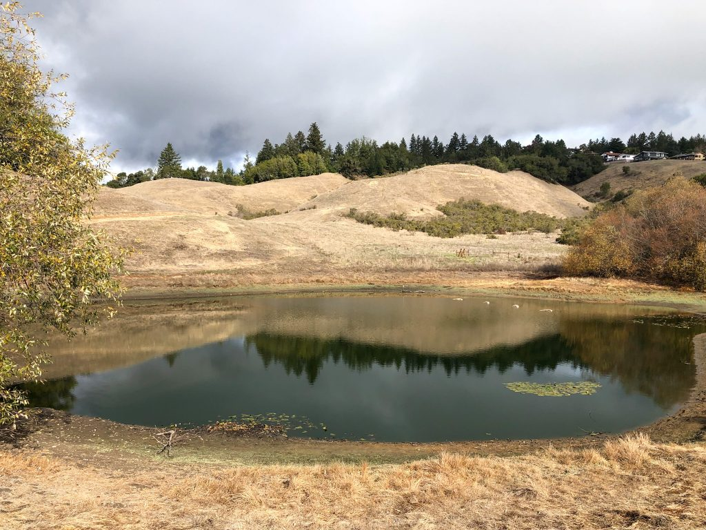 Pond Along Trail at Glenwood Preserve in Scotts Valley, California